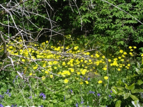 in Armadale Castle gardens