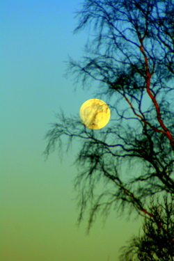 Moon with birch tree near Braco