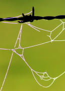 Web on barbed wire