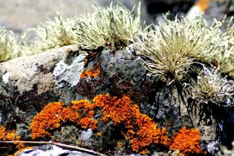 Lichen on stone, Argyll