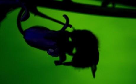 Bee in shadowland