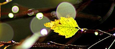 Tha last birch leaf