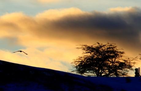Sunset on the B8033 near Braco